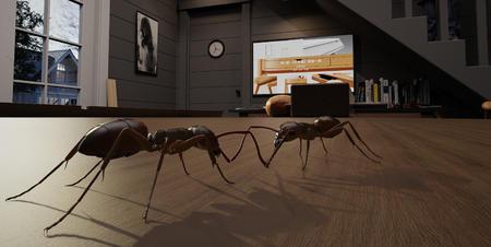 《小屋作坊-蚂蚁寻?》