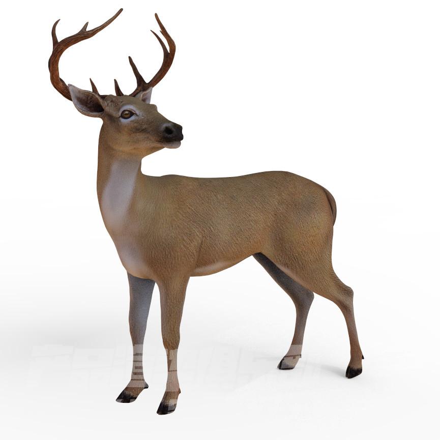 高精度小鹿3D模型