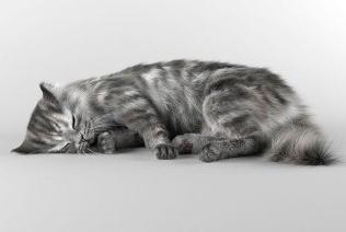超高精度猫咪模型