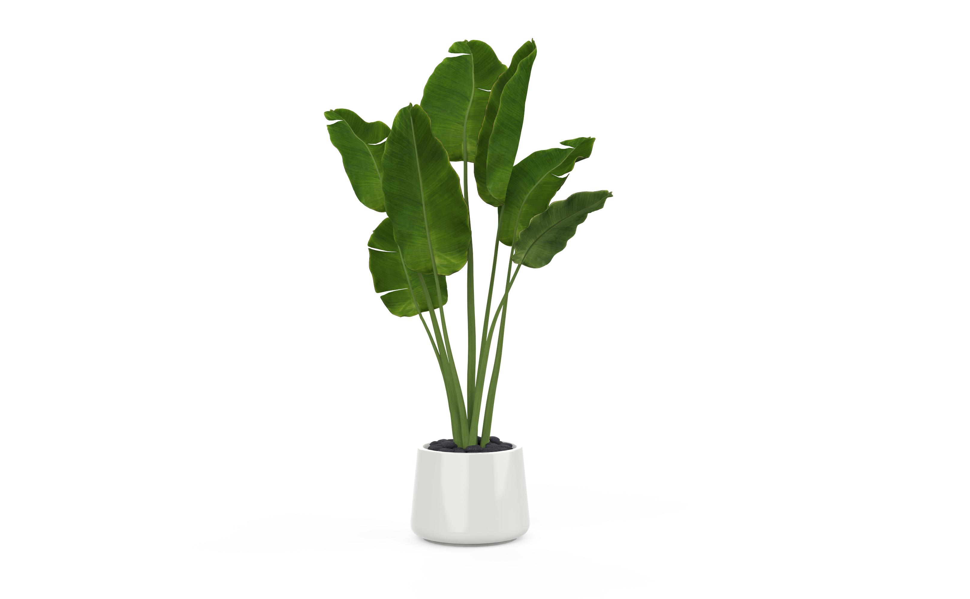 一个植物盆栽(keyshot9源文件)