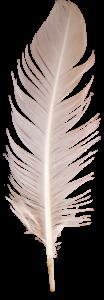 羽毛3D模型