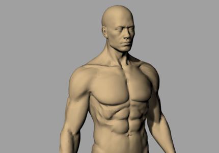 3D标准人体模型